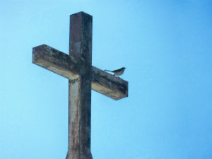 Because God Needs Nothing He Can Give Us Everything - Bird perched on cross - Weekly Blog Post by Dr. Craig Biehl
