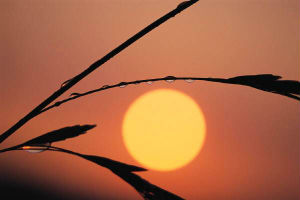Unbelief Denies the Obvious and Is Without Excuse - Weekly Blog Post by Dr. Craig Biehl - orange sky, sun, grass stem with dew
