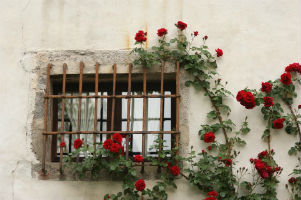 Thorns as Windows to the Soul - Weekly Blog Post by Dr. Craig Biehl - barred window with red roses climbing around it